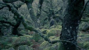 Wistman woods 2